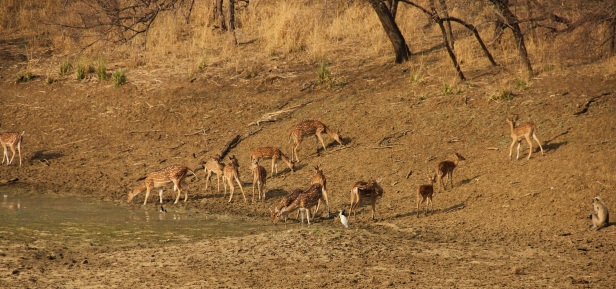 summer vacation in tadoba tiger reserve