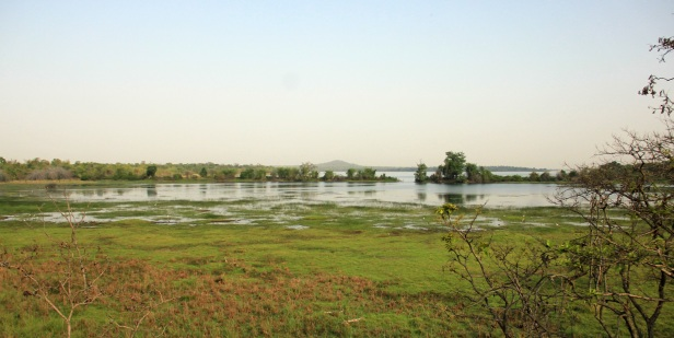 summer vacation in tiger reserve - irai lake