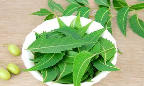 neem leaves - How to kill head lice naturally?